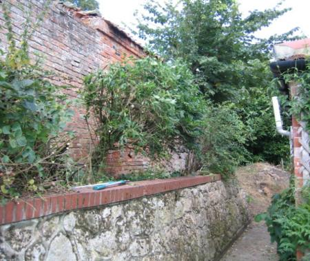 Original lime mortar wall is state of disrepair with self seeded trees and shrubs growing in it